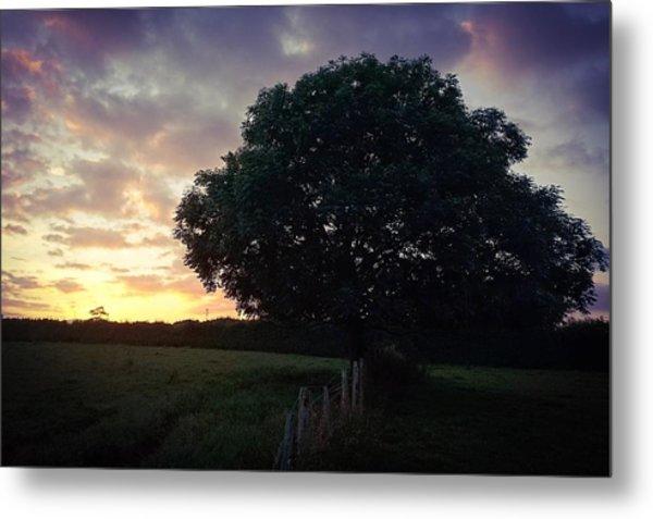 Symme Tree Sunrise Metal Print