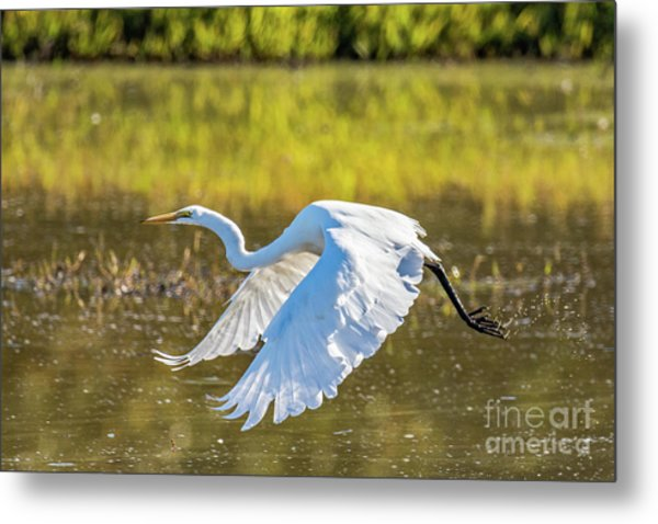Metal Print featuring the photograph Take Off by Craig Leaper