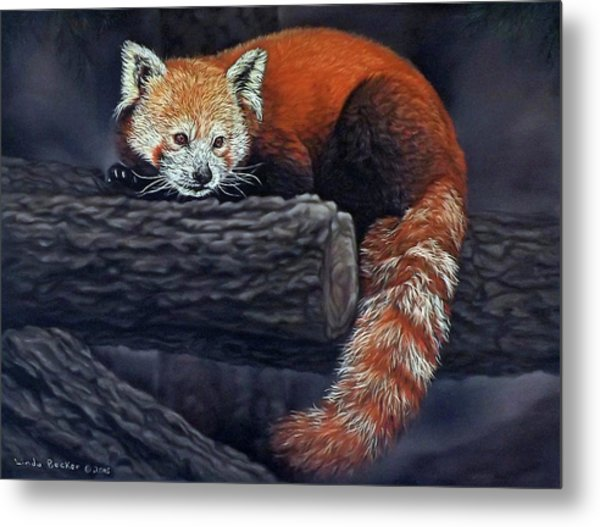Takeo, The Red Panda Metal Print