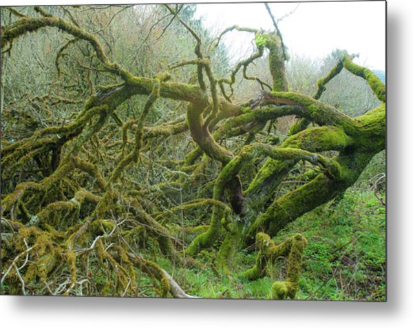 Metal Print featuring the photograph Tangled Moss by Mark Duehmig