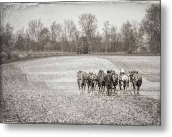 Team Of Six Horses Tilling The Fields Metal Print