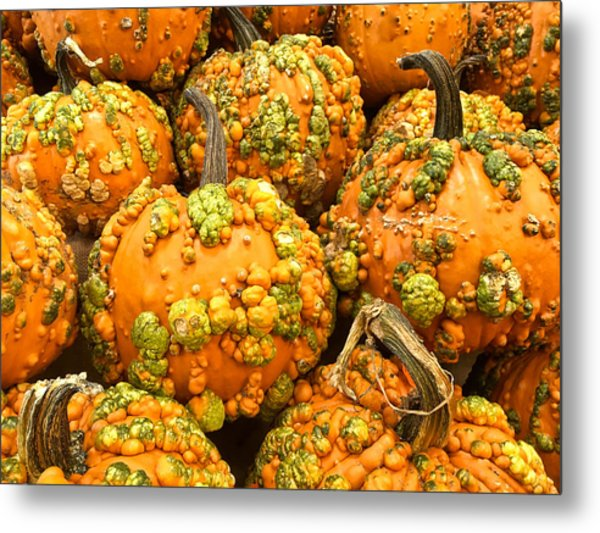 Textured Pumpkins  Metal Print