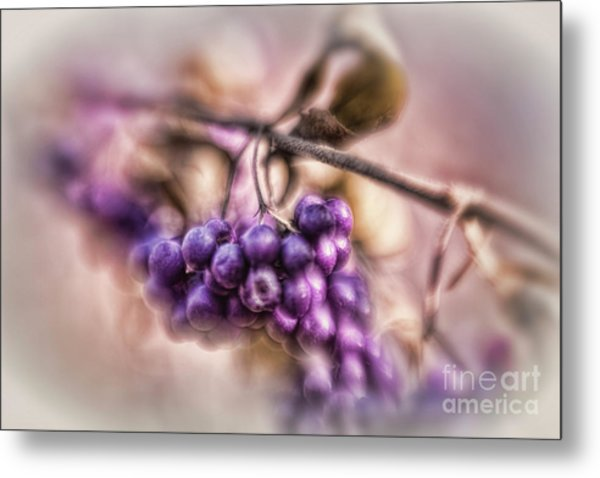The American Beautyberry Metal Print