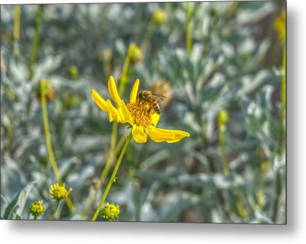 The Bee The Flower Metal Print