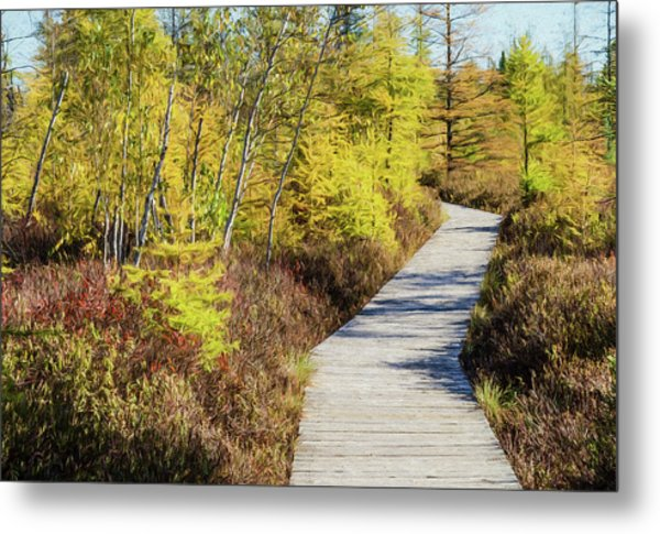 Metal Print featuring the photograph The Boardwalk At Mer Bleue. by Rob Huntley