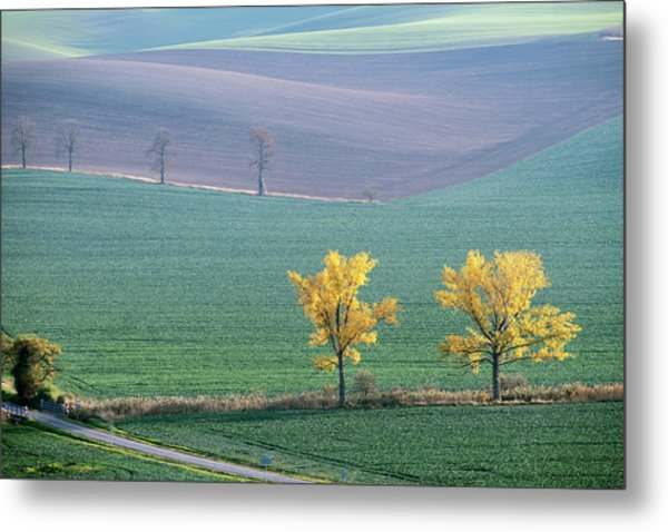 Metal Print featuring the photograph The Chestnuts Way, Moravia 15 by Dubi Roman