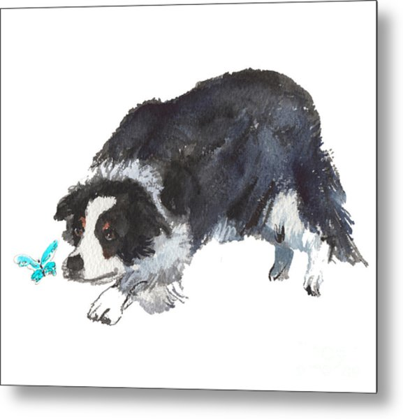 The Collie And Blue Butterfly Metal Print