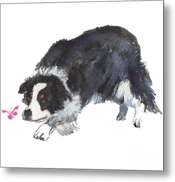 The Collie And Pink Butterfly Metal Print