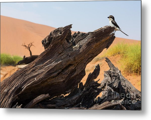 The Desert Landscape Metal Print