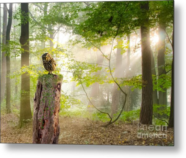 The Enchanted Forrest Metal Print