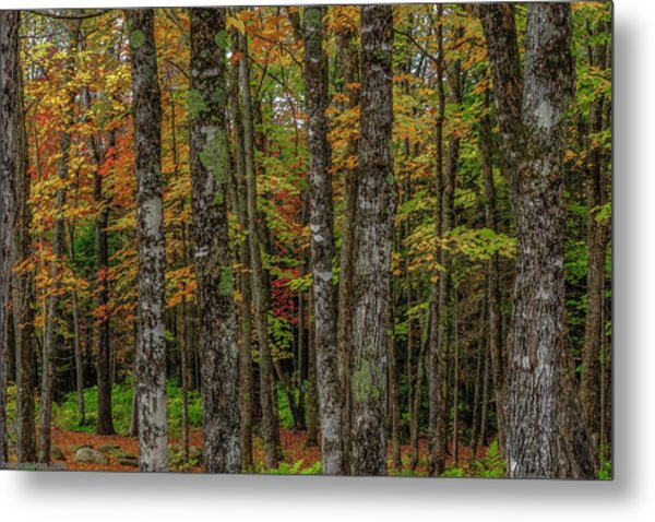 The Fall Woods Metal Print