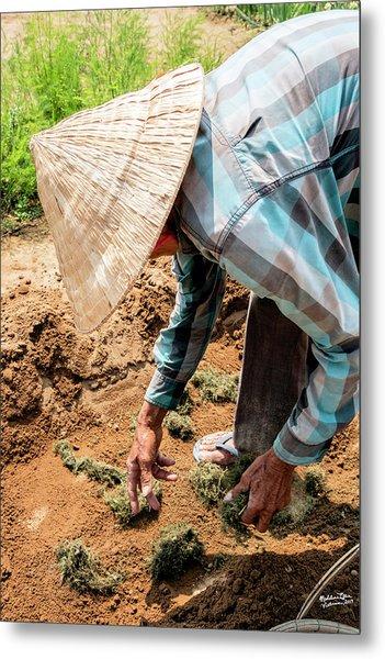The Hoi An Organic Farmer, Vietnam  Metal Print