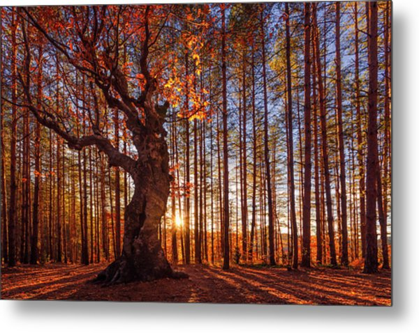 The King Of The Trees Metal Print