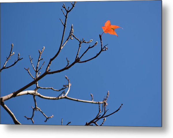 The Last Leaf During Fall Metal Print by By Ken Ilio