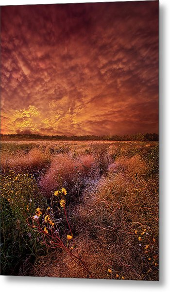 Metal Print featuring the photograph The Light So Softly Spoken by Phil Koch