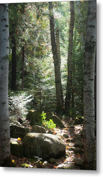 The Living Forest Metal Print