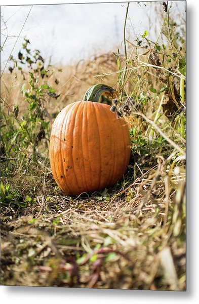 The Lone Pumpkin Metal Print