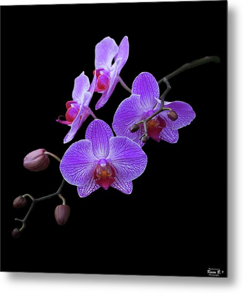 The Orchids Metal Print