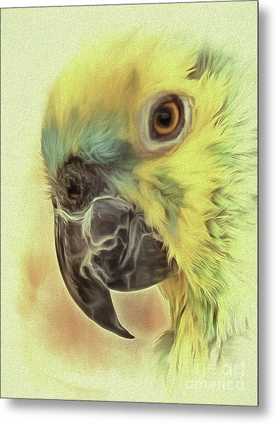 Metal Print featuring the photograph The Parrot Sketch by Leigh Kemp