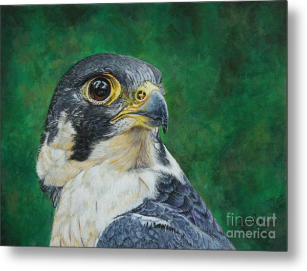 The Proud Peregrine....fastest Creature On The Planet Metal Print