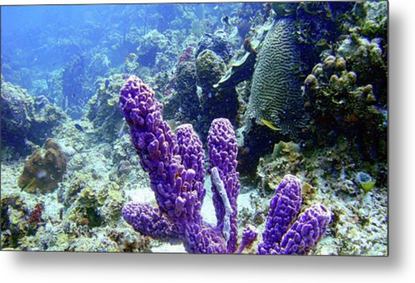 The Purple Sponge Metal Print