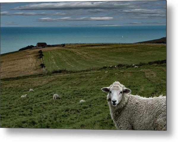 Metal Print featuring the photograph The Sheep On The Clifftop by Chris Lord