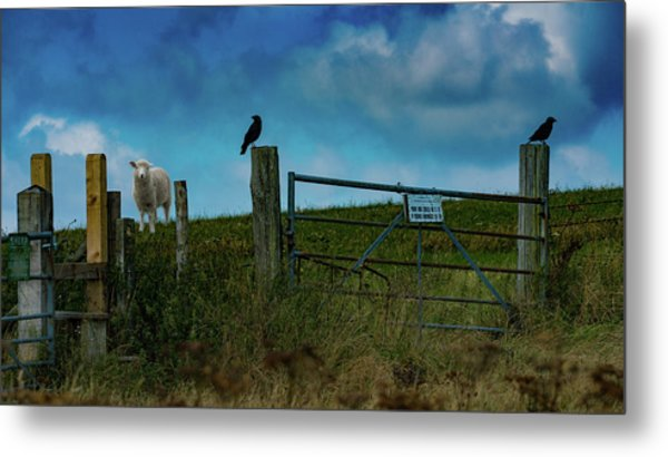 Metal Print featuring the photograph The Sheep That Hates Dogs by Chris Lord