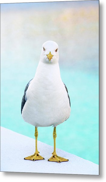 The Stare Of The Seagull Metal Print