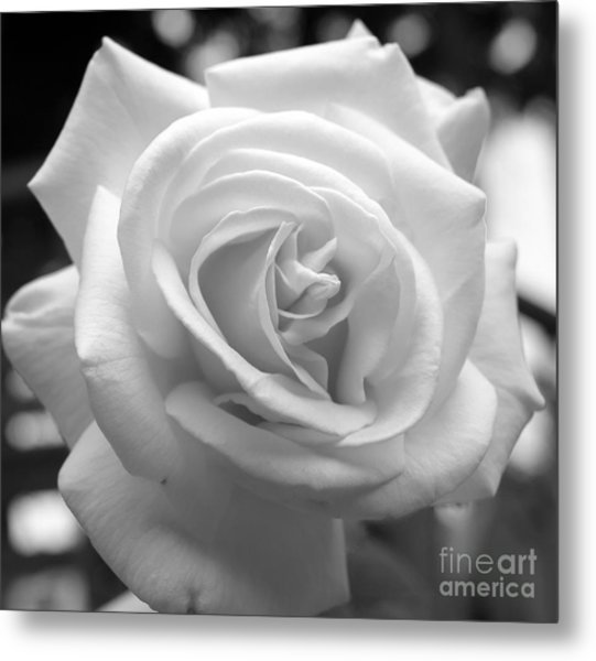 The Subtle Rose Metal Print