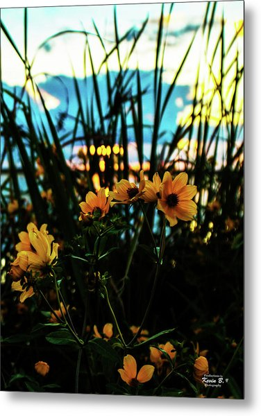 The Sunflower's Sunset Metal Print