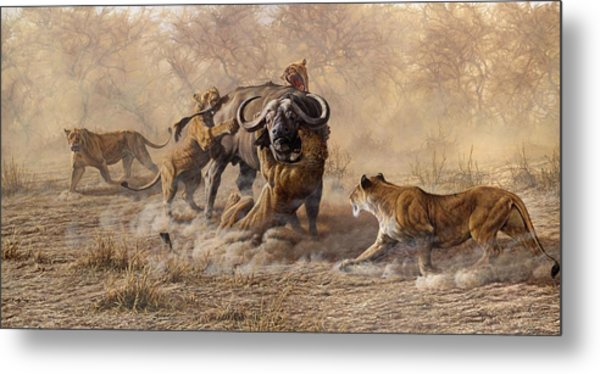 Metal Print featuring the painting The Take Down - Lions Attacking Cape Buffalo by Alan M Hunt