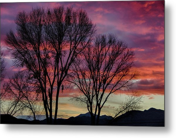 The Trees Know Sunset Metal Print