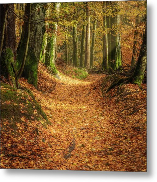 Metal Print featuring the photograph The Yellow Leaf Road by Elliott Coleman