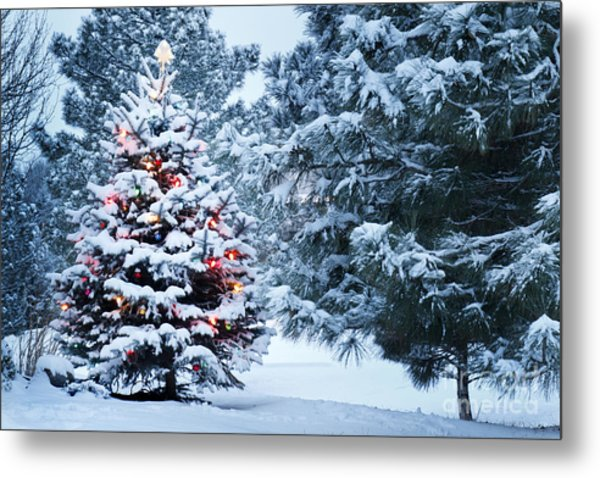 This Snow Covered Christmas Tree Stands Metal Print