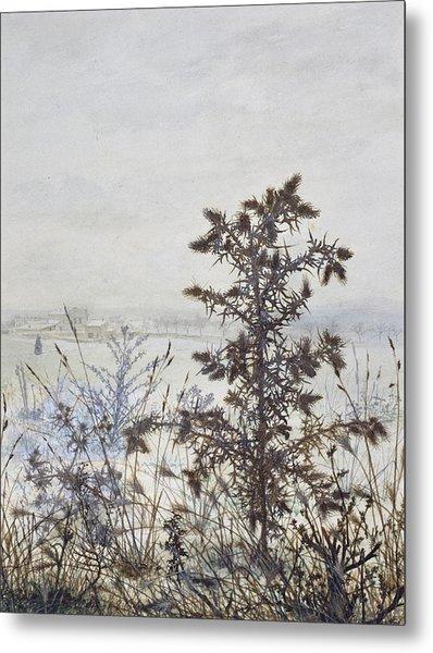 Thistles And Weeds Metal Print