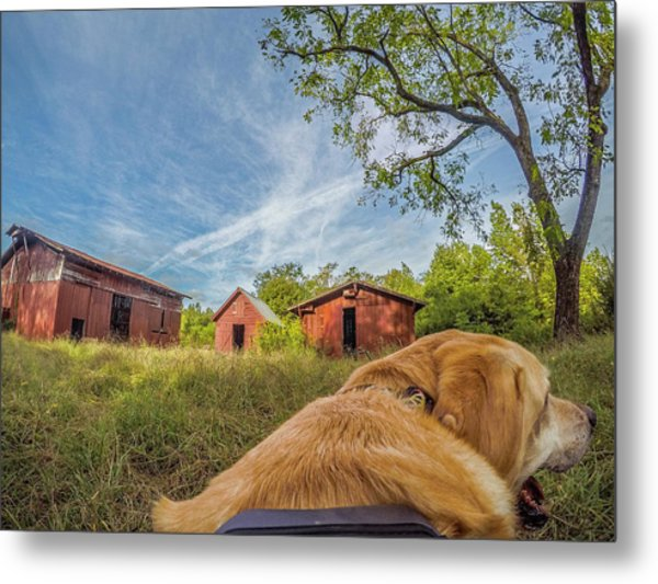 Metal Print featuring the photograph Thornburg Barns By Photo Dog Jackson by Matthew Irvin