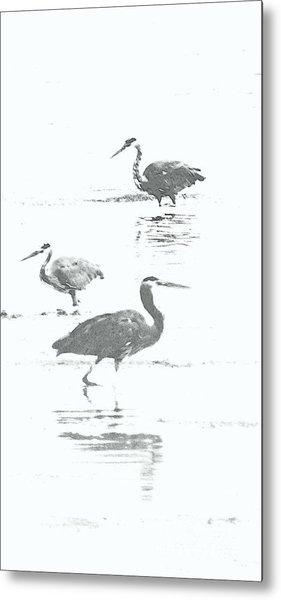 Three Blue Herons Metal Print