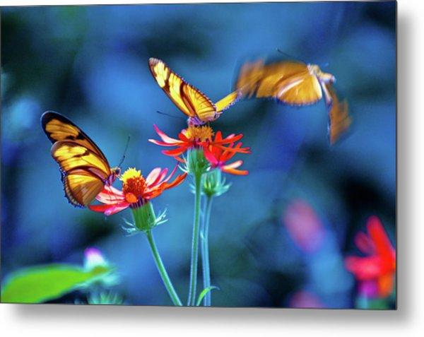 Three Butterflies Metal Print by By Ken Ilio