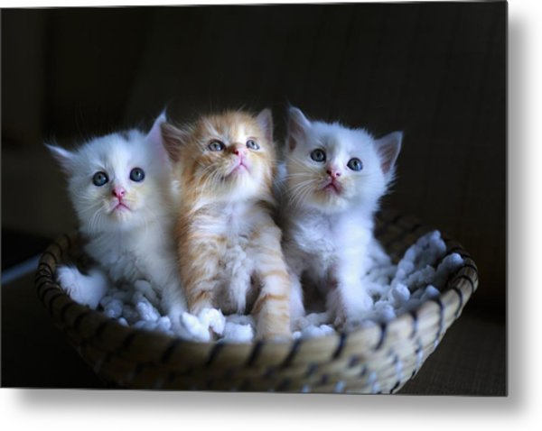 Three Little Kitties Metal Print