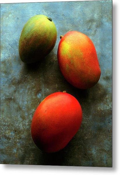 Three Mangoes, Two Ripe, One Green On Metal Print