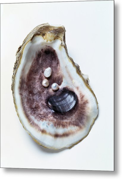 Three Seed Pearls In Oyster Shell Metal Print
