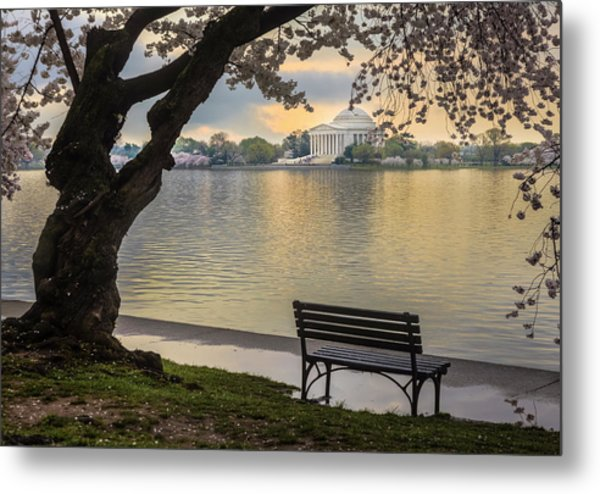 Tidal Basin With Cherry Blossoms And Metal Print by Drnadig