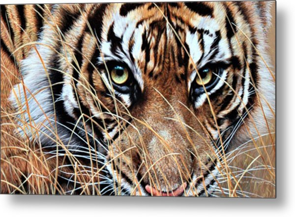 Metal Print featuring the painting Tiger Eyes By Alan M Hunt by Alan M Hunt