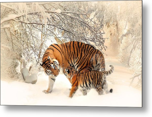 Tiger Family Metal Print