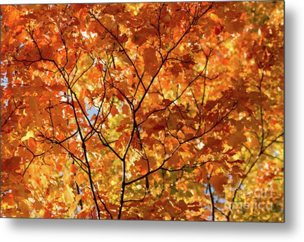 To Be Up In The Trees Metal Print