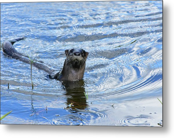 To My Otter Amazement Metal Print