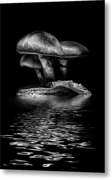 Metal Print featuring the photograph Toadstools On A Toronto Trail Reflection 3 by Brian Carson