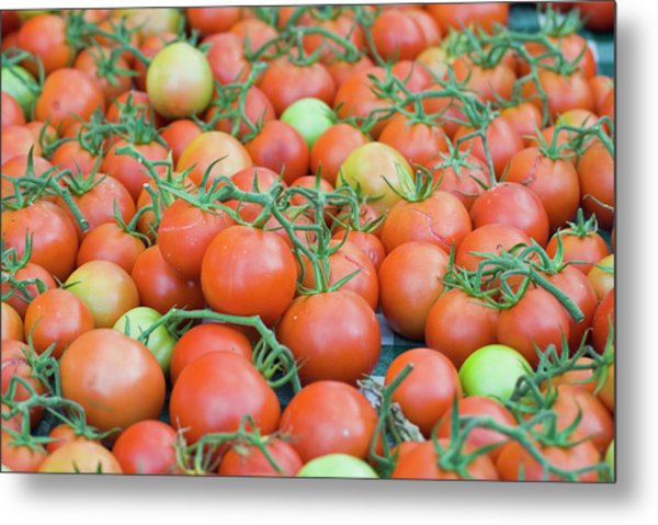 Tomatoes On The Vine Metal Print by By Ken Ilio
