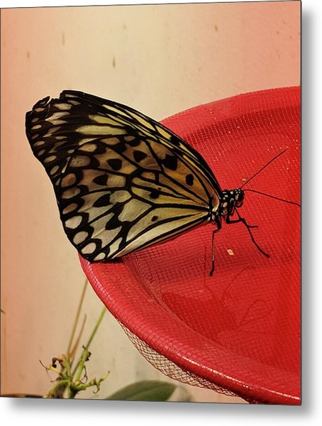 Torn Butterfly Metal Print