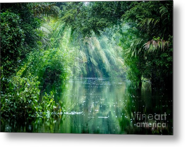 Tortuguero National Park, Rainforest Metal Print